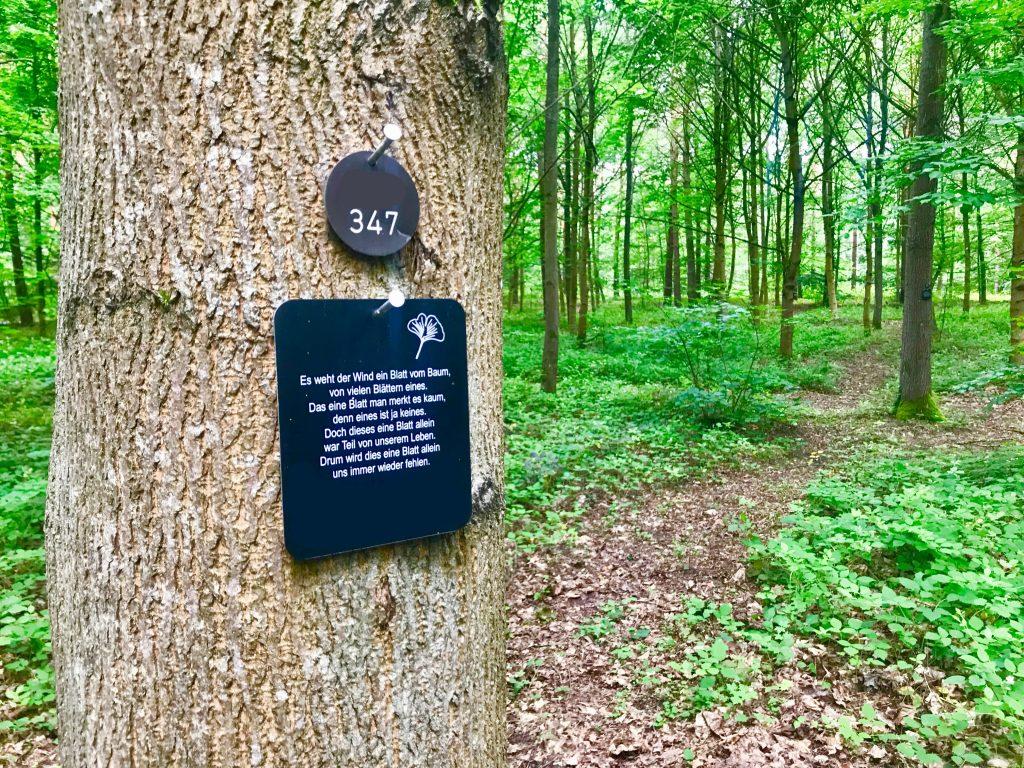 Eine weitere, immer häufiger gewählte Alternative zu herkömmlichen Feuerbestattung ist die Beisetzung einer Urne in einem Wald. Wir arbeiten unter anderem mit der Firma Friedwald zusammen, die den für uns nächstgelegenen Bestattungswald in Dudenhofen bei Speyer betreibt.